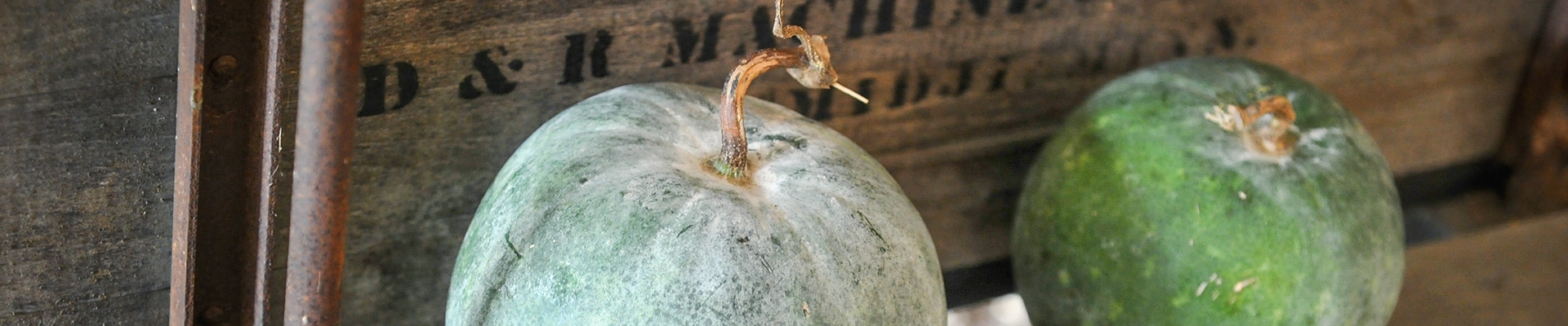 Wax Melon
