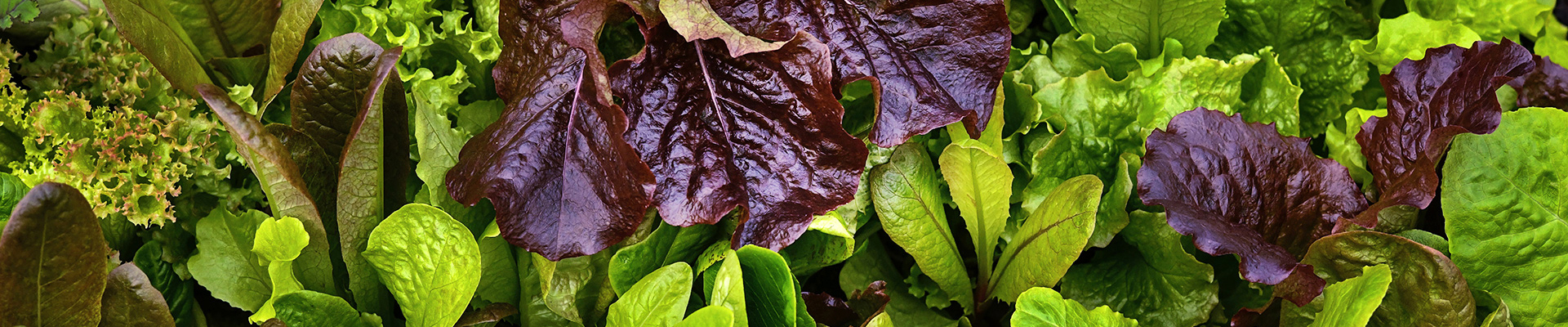Salad Blends