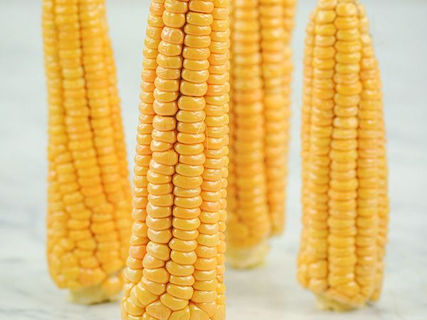 Finest Seeds* Suitable For UK Weather UK Seller* Giant White Sweet Corn 10