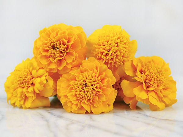 Gypsy Sunshine Marigold French