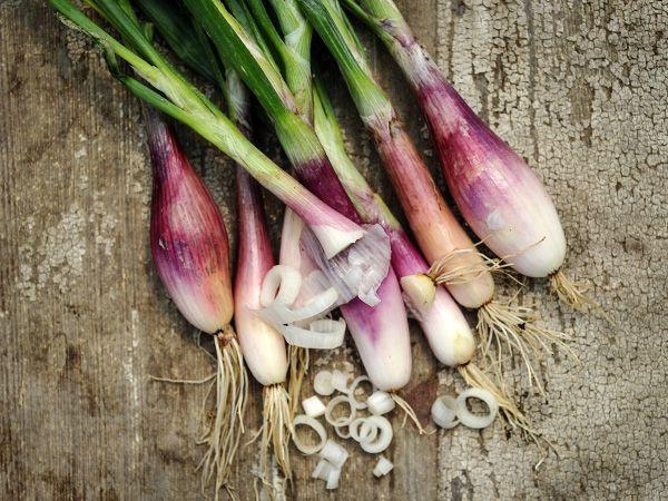 Original Pack 100 Shallot Seeds Spring Onion Porret Organic