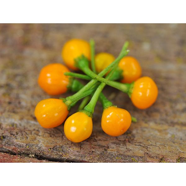SCOTCH BONNET BROWN pure seeds