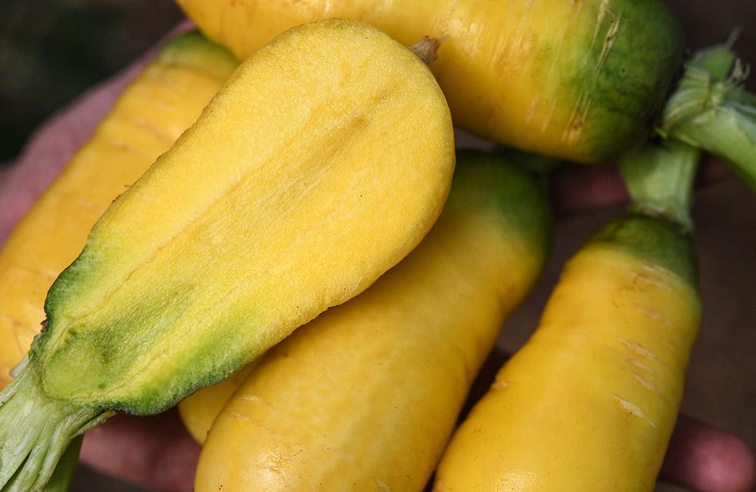 Carrot Uzbek golden LSS