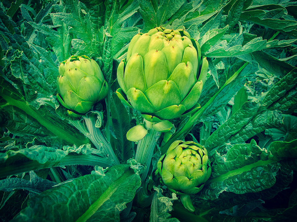 The Definitive Guide for How To Get Water Artichoke Seeds